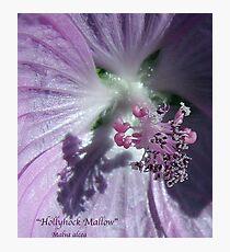 Hollyhock - Super Macro Photographic Print