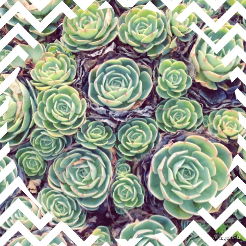 Succulents with white zig zags by Artsygirl28
