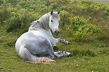 Pony by Alexandra Lavizzari