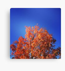 Complementary, My Dear Canvas Print