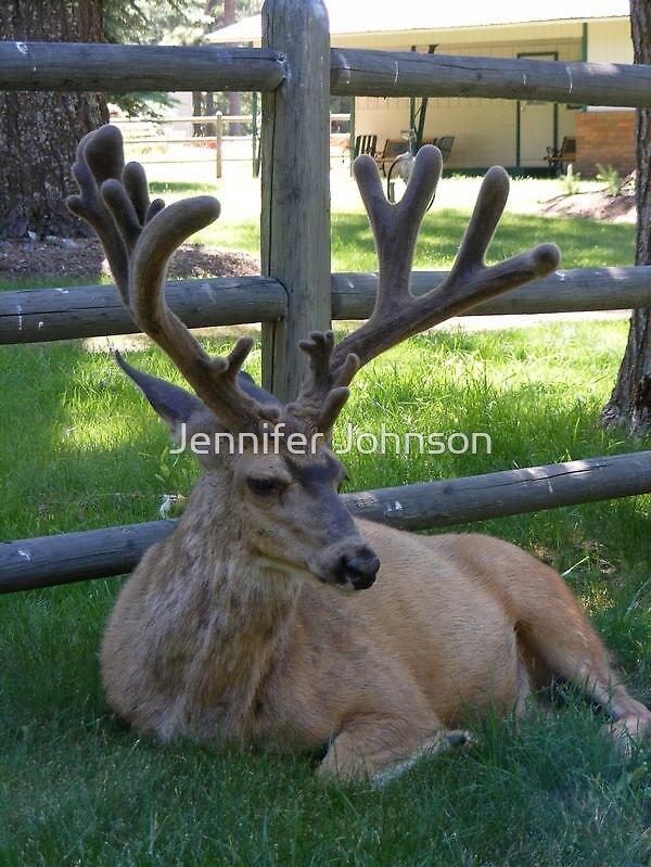 Deer  by Jennifer Johnson