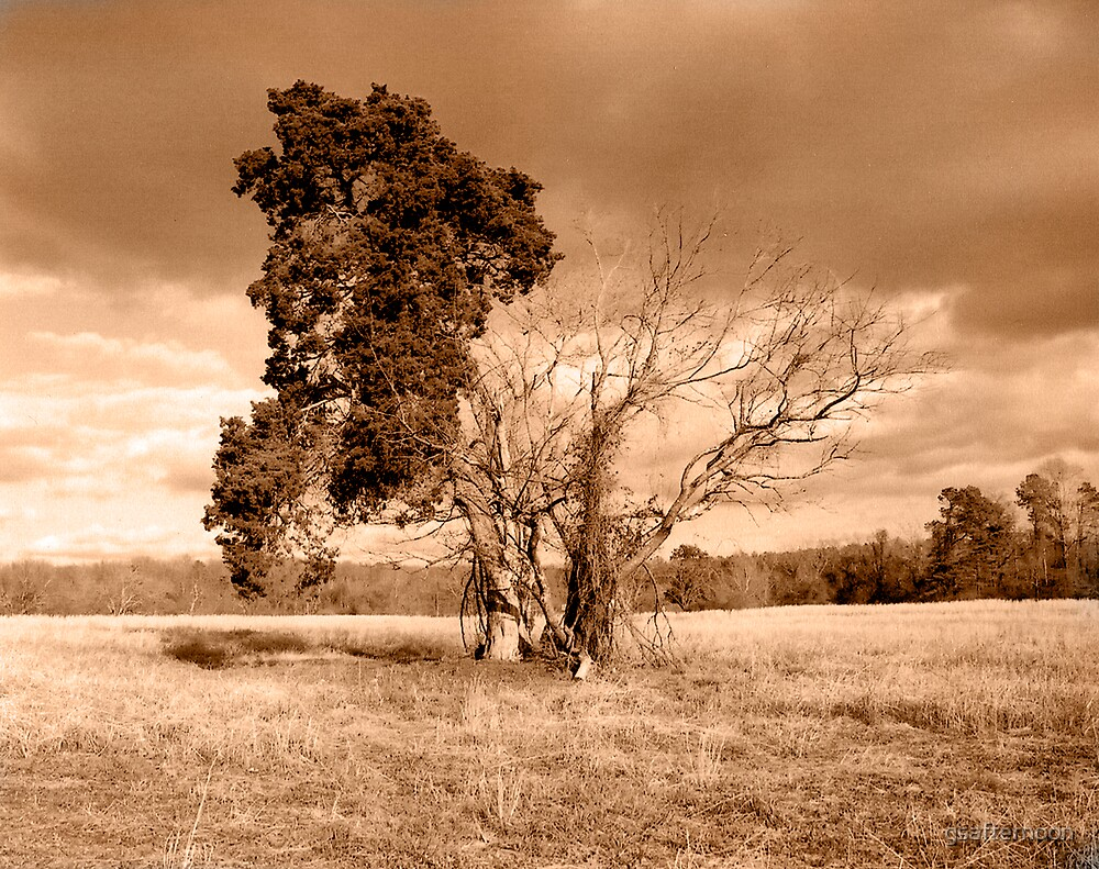solitary by gsafternoon