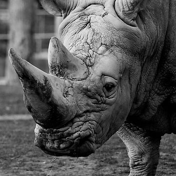 Rhino right on.... by fljac
