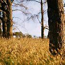 fields of... by Ryan  Austin