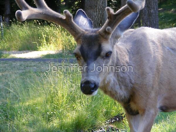 Deer5 by Jennifer Johnson