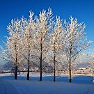 Winter Trees III by Ludwig Wagner
