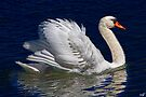 The Royal Swan by Chris Lord