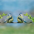 The Blue tits by M S Photography/Art
