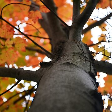 Autumn in New England by morgoldenberg