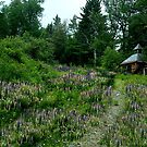 The Trail to the Lupine Cabin by Wayne King