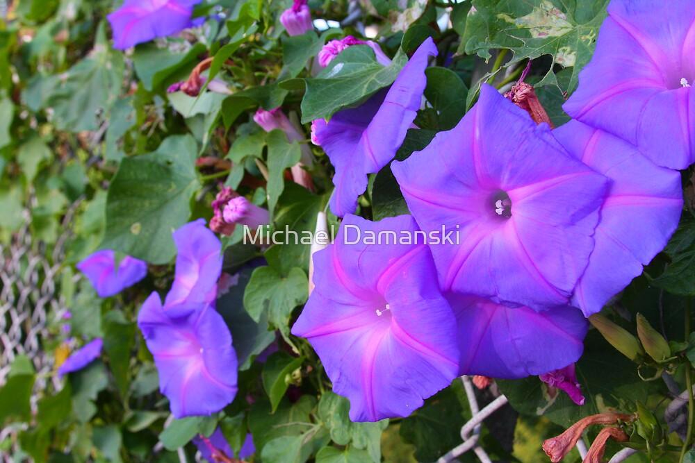 Violets by Michael Damanski