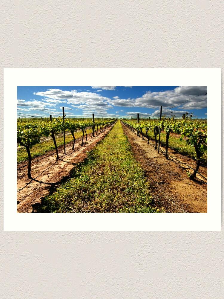 Alternate view of Vineyard Art Print