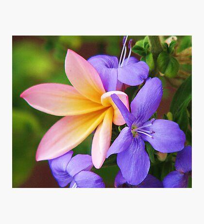 Floral Frieze Photographic Print