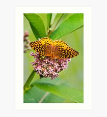 Butterfly Perched on Flowers Art Print