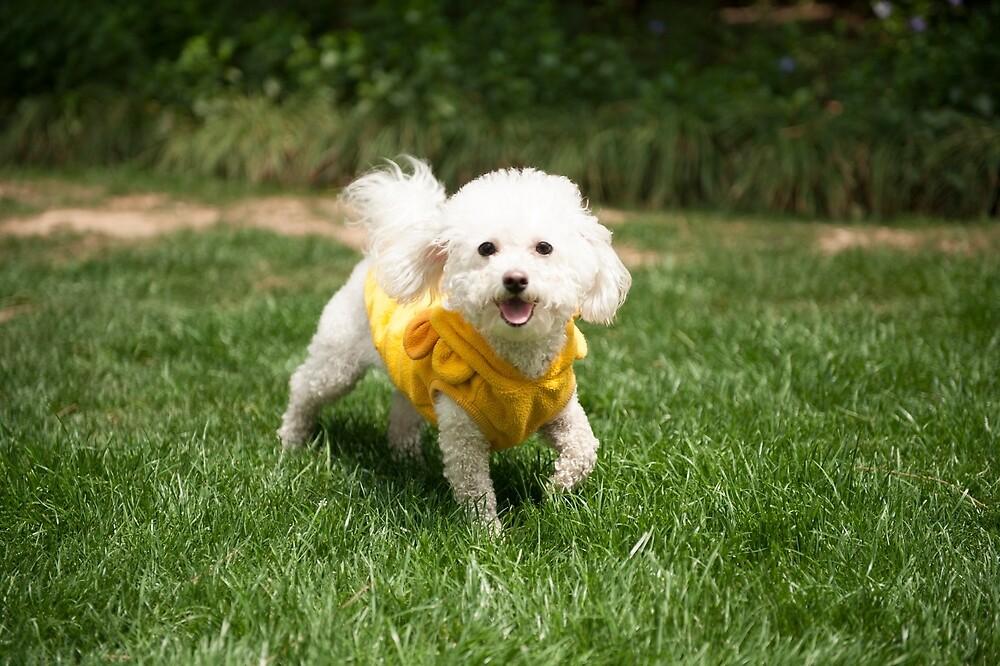 Cute White Happy Dog Running! by sallyrose1