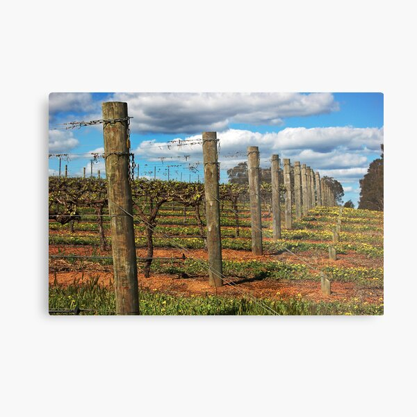 Vineyard # 3 Metal Print