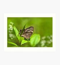 Northern Pearl Eye Butterfly Art Print