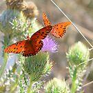 Gulf Fritillary Butterflies by Rosalie Scanlon