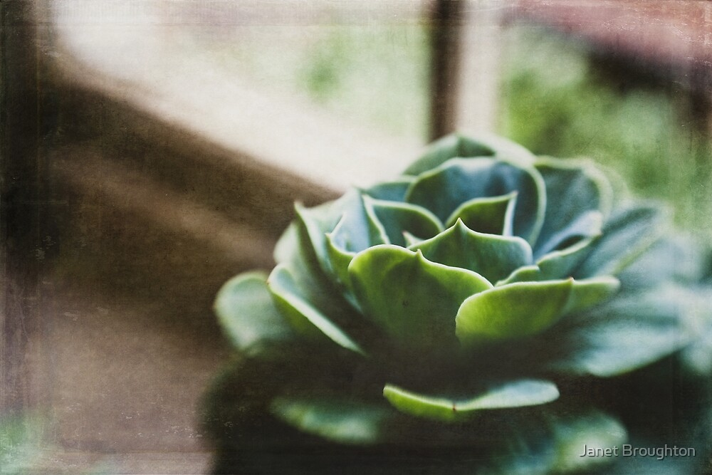 Succulent In The Window by Janet Broughton