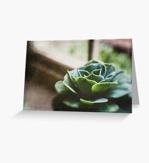 Succulent In The Window Greeting Card