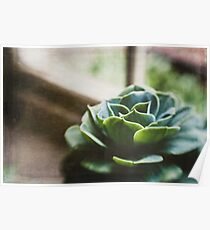 Succulent In The Window Poster