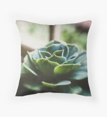 Succulent In The Window Throw Pillow