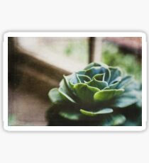 Succulent In The Window Sticker