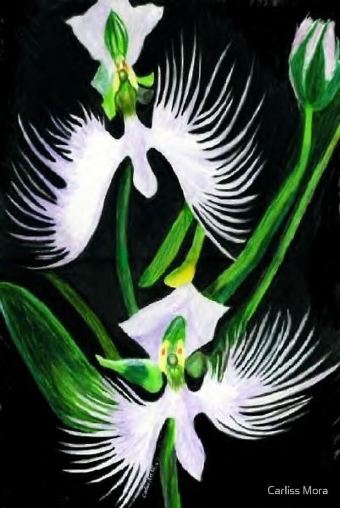 Egret Flower by Carliss Mora