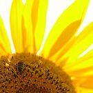 Sunny by Lorraine Deroon