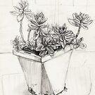 Cactus study by Fiona O'Beirne