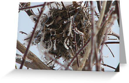 empty nest by gypsykatz