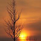Tree of Fire by Kasia-D