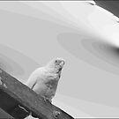 Bird on Pole by Triple8