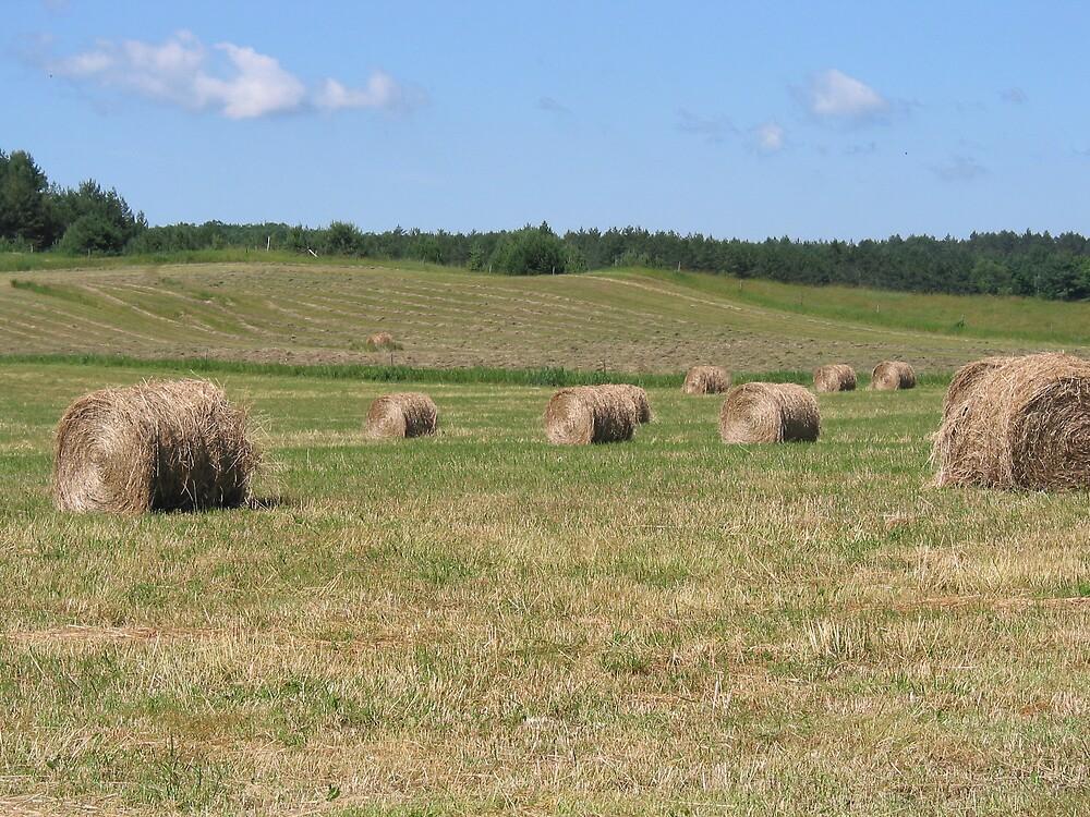 farming  by Bryon Seymour