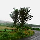 Wet road, Donegal, Ireland by Shulie1
