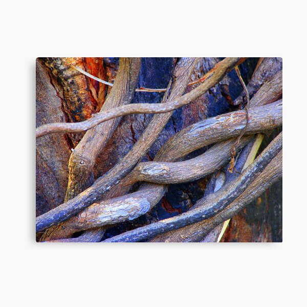 Limbs Entwined Canvas Print
