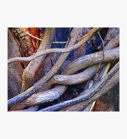 Limbs Entwined Photographic Print