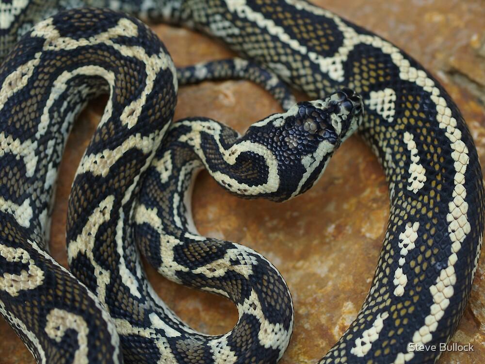 Port Macquarie Carpet Python by Steve Bullock