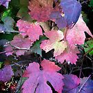 Colours of Autumn by Roz McQuillan