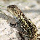 Wonderful Jacky Lizard - Australia by Mette  Spange
