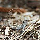 Juvenile Jacky Lizard - Australia by Mette  Spange