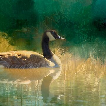 Canada Goose, digital art by Donna Ridgway by montanaartist