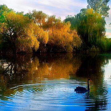 willows and the pond by craig123