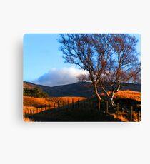 Sunny Glen clova Canvas Print
