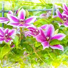 Clematis painting by JohnDSmith