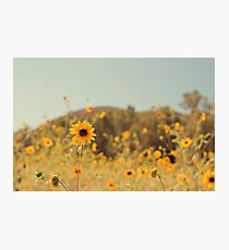 Many Flowers Photographic Print