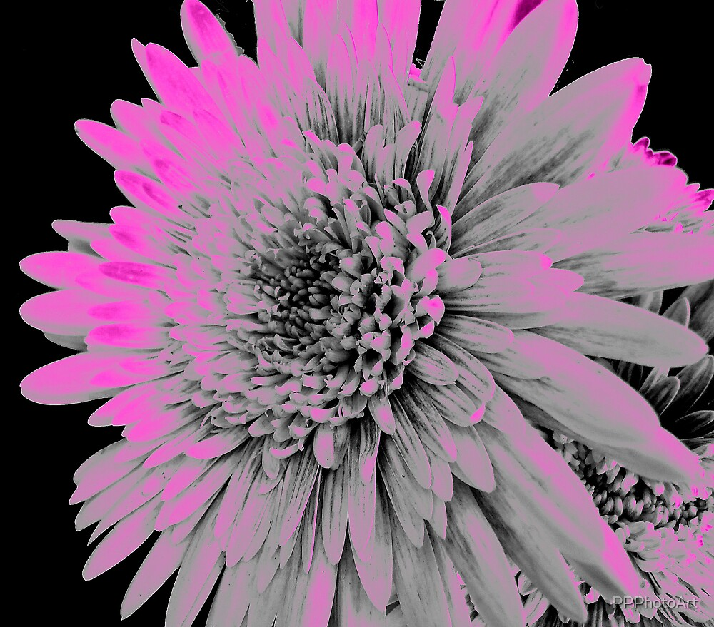 Soft Pinks by PPPhotoArt
