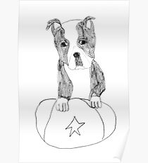Sad Eyed Pup Poster