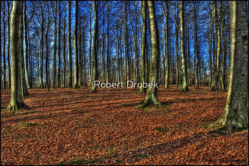 In the Woods by Robert Drobek