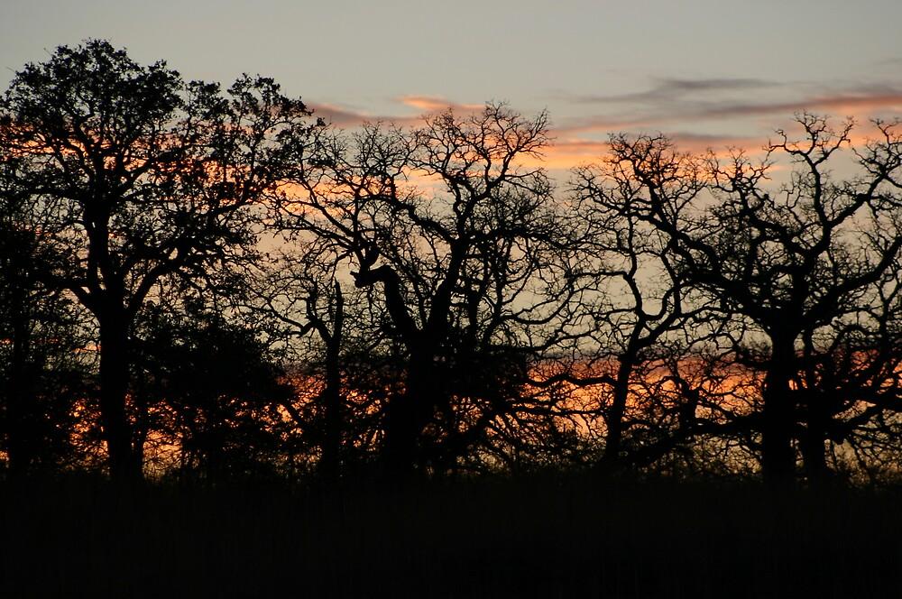 Oklahoma SunSet by Stephanie  Taylor